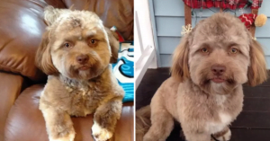 10+ Human-like Dogs That Will Freak You Out Because They Look Like Someone You Know