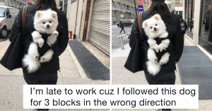 10+ Very Important Dog Tweets That Need Your Full Attention To Make Your Day Better