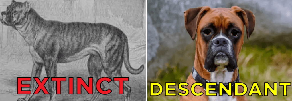 10 Extinct Dog Breeds That You Probably Don T Know About