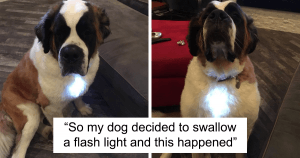 10+ Dog Tweets To Brighten Up Your Ruff Day
