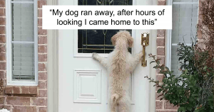 10+ Hilarious Dog Photos That Will Make You Laugh