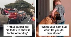 10+ Wholesome Doggo Stories To Cheer You Up Instantly